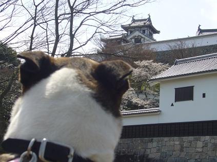 ブリコと福知山城