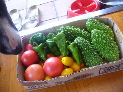 とれとれ野菜