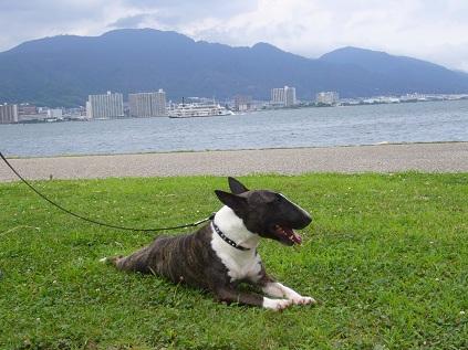 琵琶湖・ミシガン