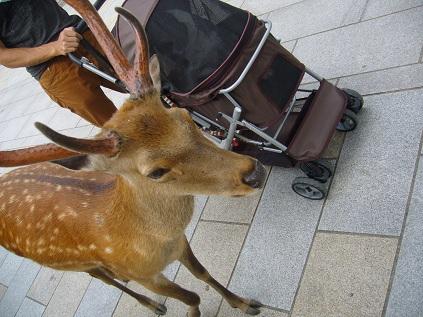 鹿!!!!!