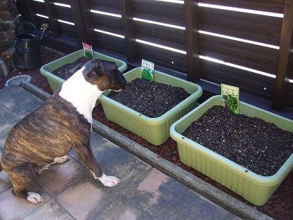 家庭菜園!