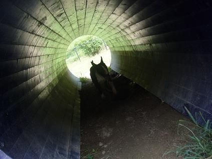 トンネル!