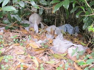 植え込みの中に捨てられているポリ袋入り犬のフン