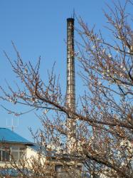 久米川湯の煙突と白梅