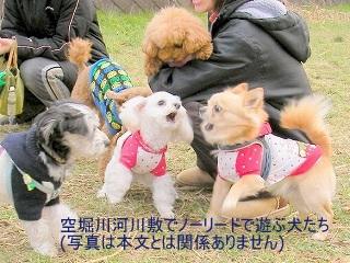 空堀川河川敷でノーリードで遊ぶ犬たち