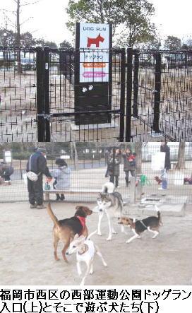 福岡市西区「西部運動公園」ドッグラン