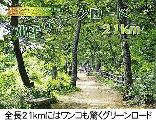 全長21kmにはワンコも驚くグリーンロード