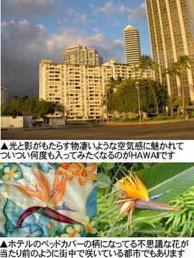 東村山わん友会HAWAII犬フン探しの旅001