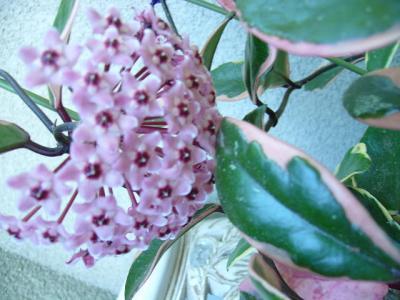 ベロア お花