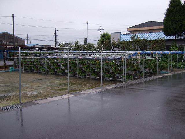 近藤農場3