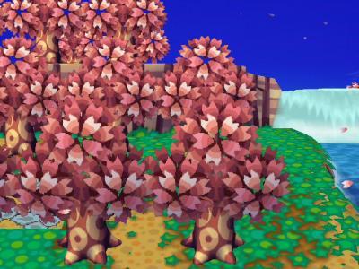 お花見?1