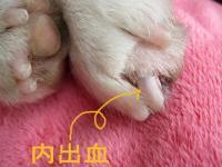 爪の傷は、毛で隠れてます (^^;)