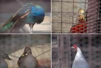 鳥さんがイッパイ・・・