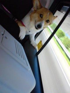 前のシートへ移りたいよ?♪