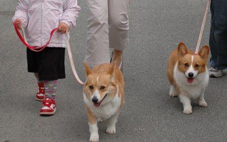 みんなで、お散歩♪