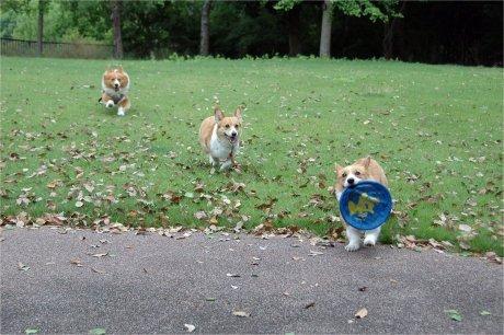 走る走る? =3 =3 =3