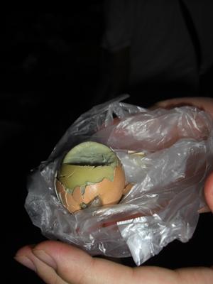本場(?)ベトナムはでは女性も普通におやつで食べるといわれる孵化しかけのゆで卵。