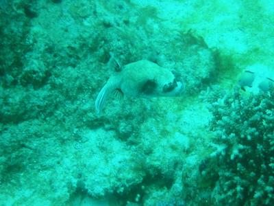 diving.28