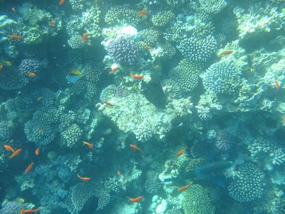 diving.36