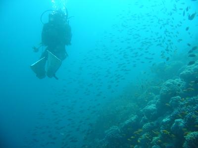 diving.38
