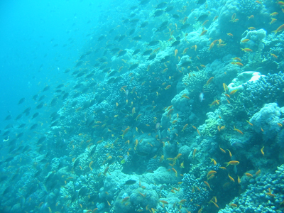 diving.39