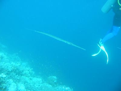 diving.40