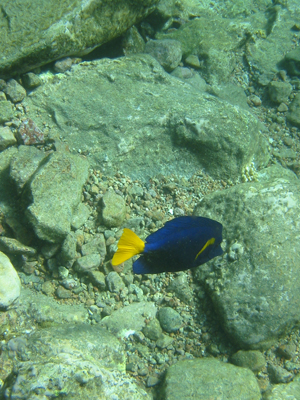 diving.45