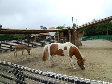 horsegoat