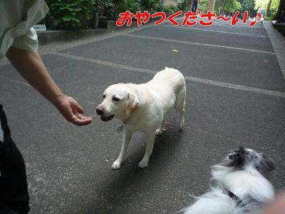 5.ミモザちゃん