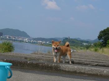 今日は川遊び