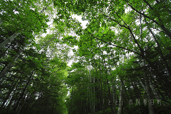 北海道133