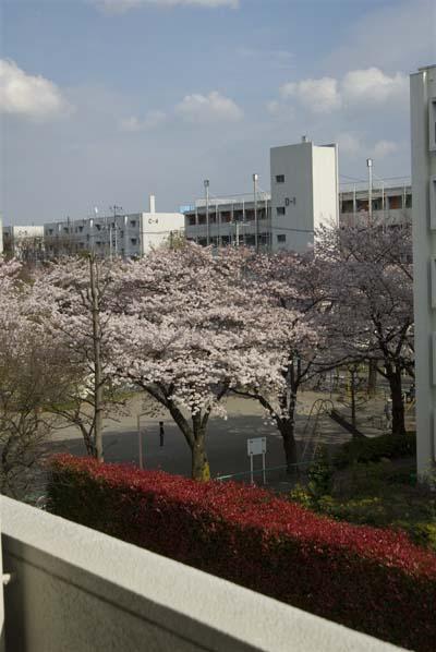 090405sakura.jpg