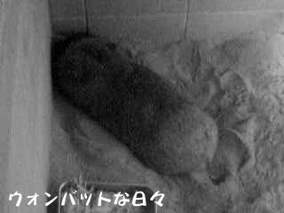 フク(丸太な寝姿)