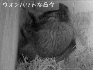 フク-夜の大開脚