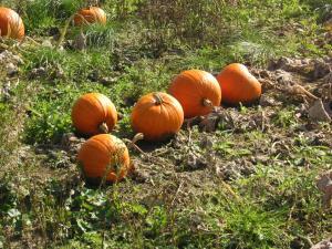 かぼちゃをアップで