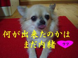 081009_11.jpg
