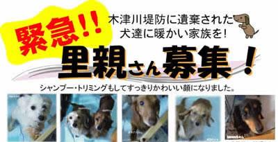 京都木津川堤防下放棄犬いぬ親募集へ