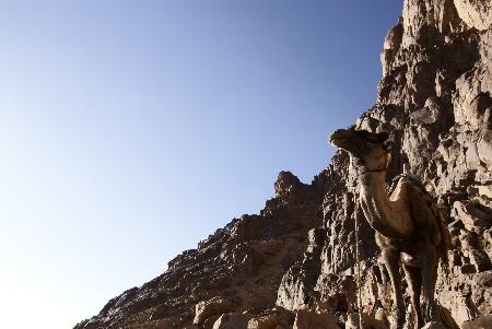 Mt.Sinai