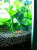 熱帯魚002