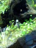熱帯魚013