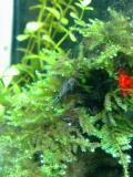 熱帯魚014