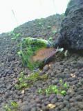 熱帯魚015