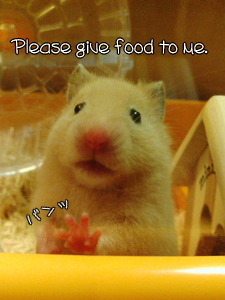 Please give food to me.