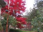 善光寺の紅葉