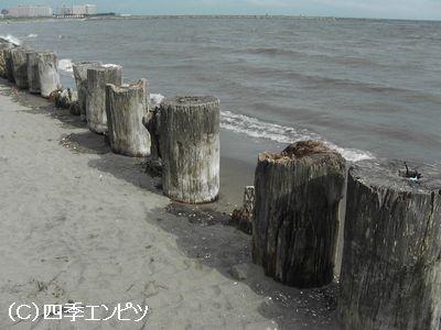葛西海浜公園 海の色