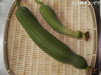 ヘチマ 収穫