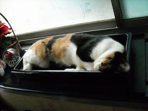 水盤猫 002