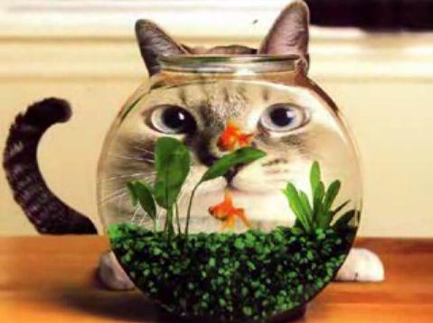 cat30.jpg