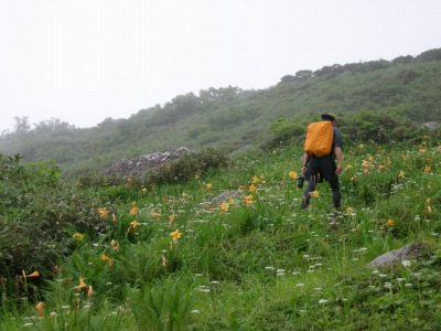 森吉山南斜面のお花畑
