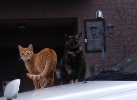 cats_best06.12.17.jpg